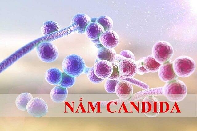 Nấm Candida albicans là nguyên nhân chính gây bệnh đẹn ở trẻ em